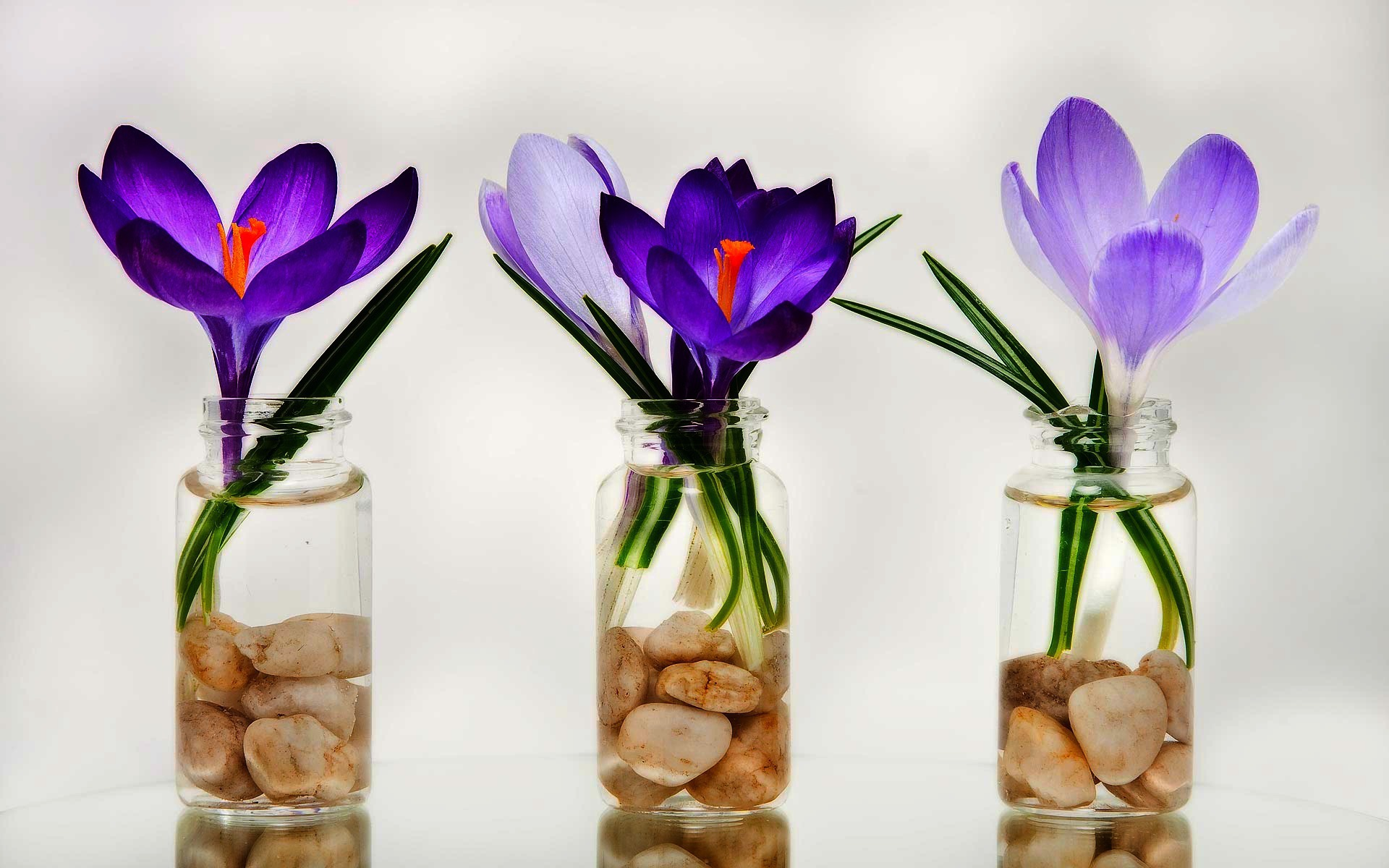 nature-landscapes widewallpaper delicate-crocus 4482