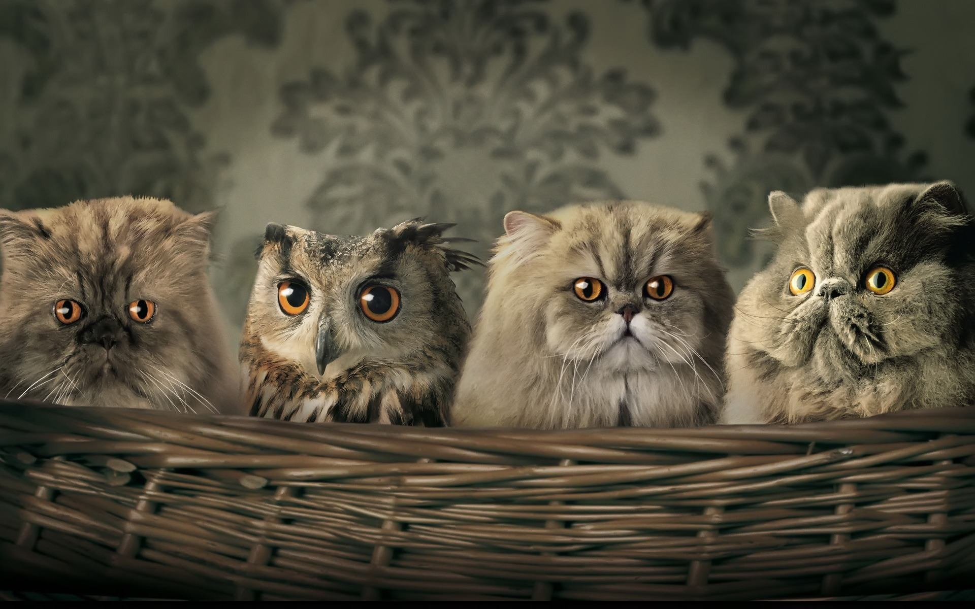 Funny-Cats-Wallpaper