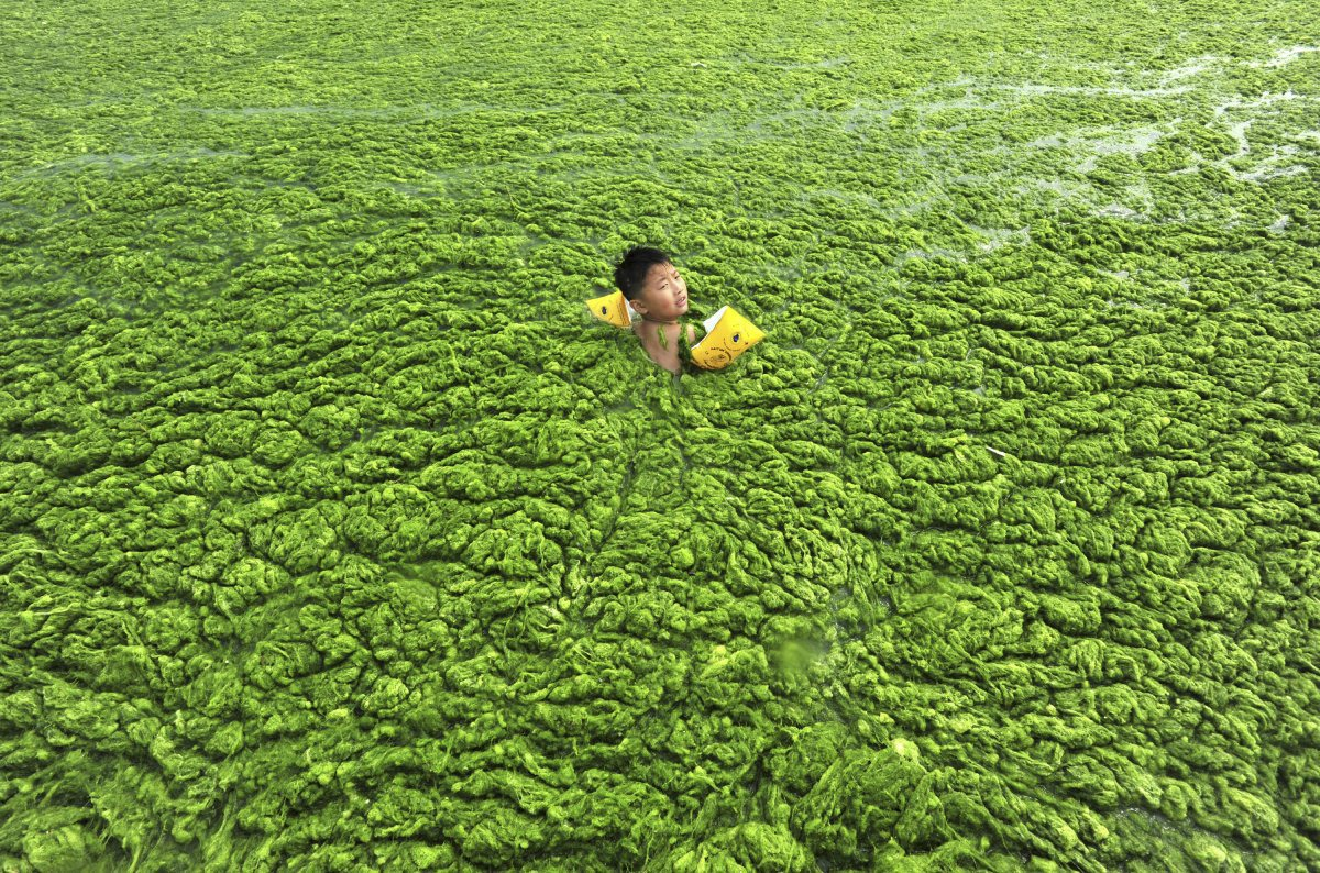 a-boy-swims-in-the-algae-filled-coastline-of-qingdao-shandong-province