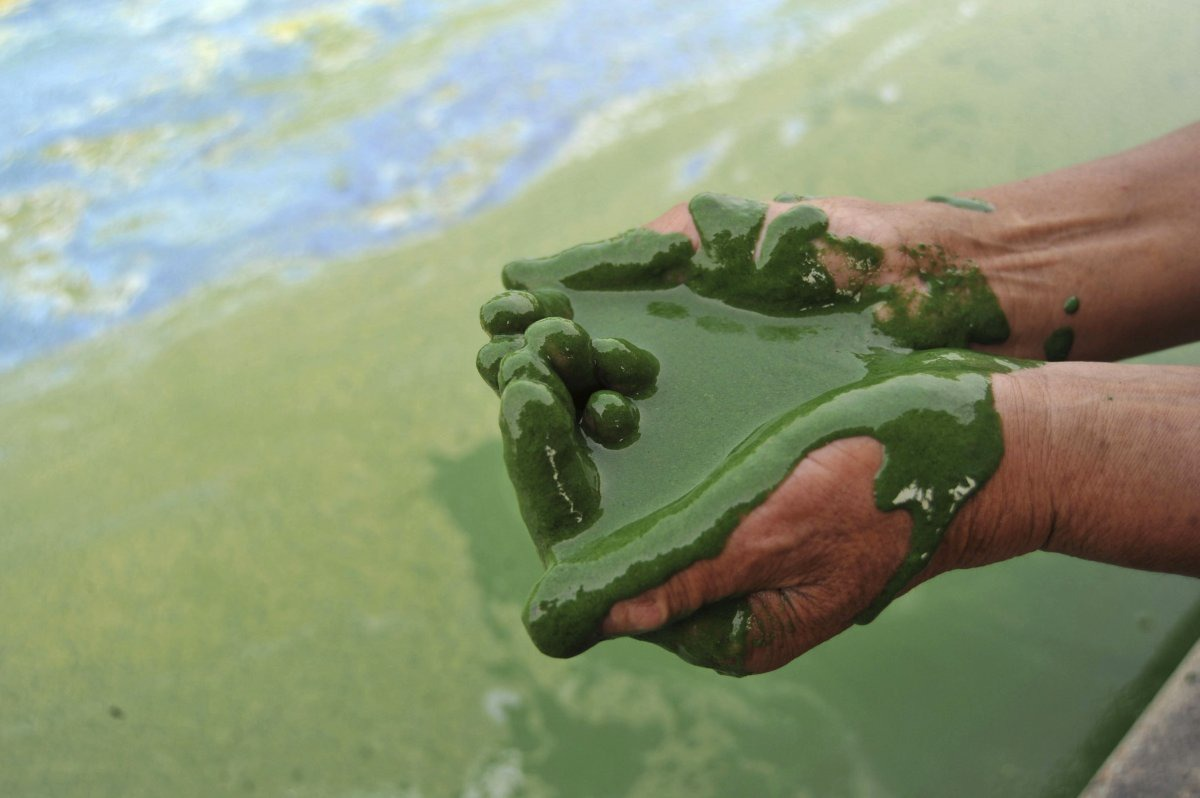 a-fisherman-scoops-up-algae-filled-water-from-chaohu-lake-in-hefei-anhui-province-june-16-2009