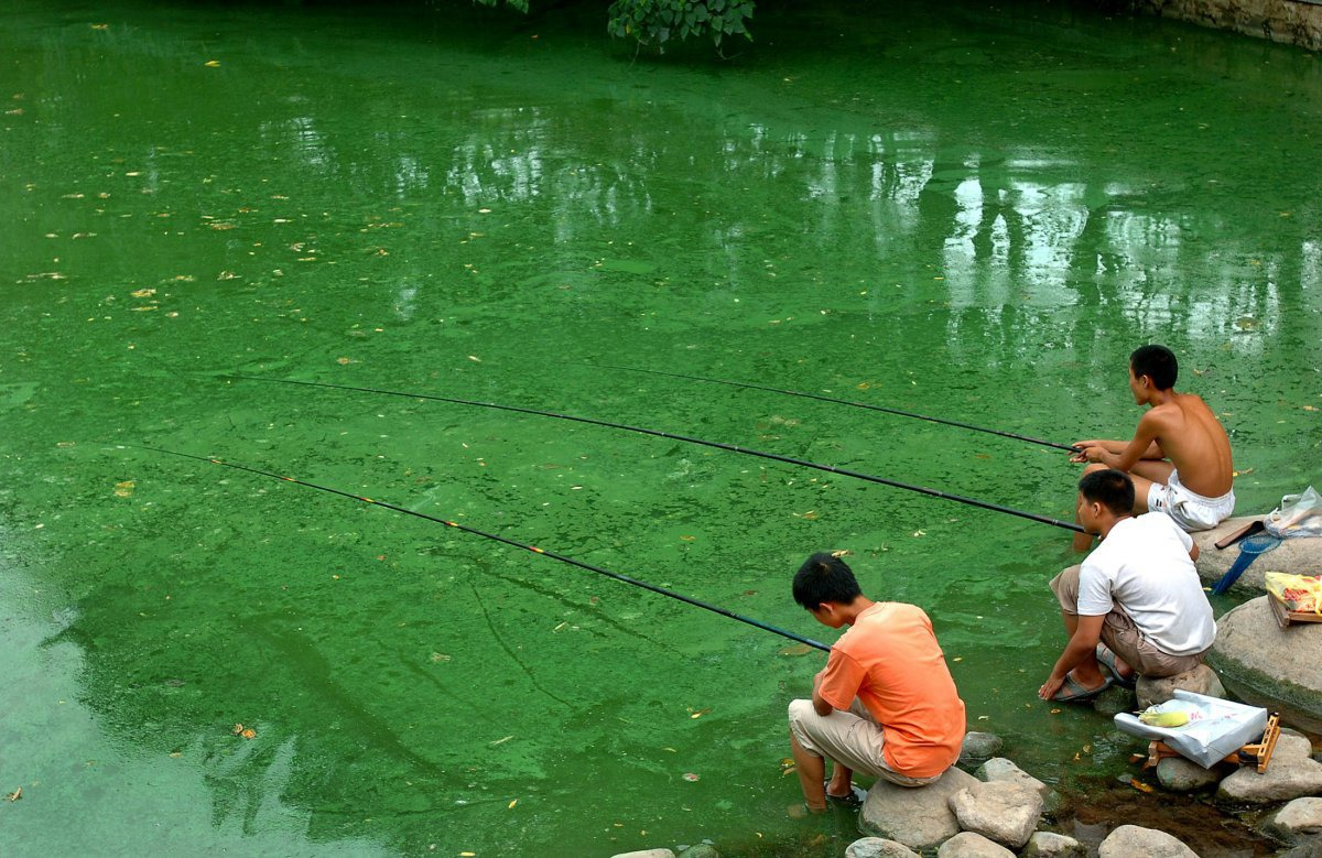 children-fish-in-a-polluted-river-covered-with-algae-in-hefei-east-chinas-anhui-province-july-18-2006