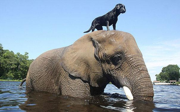 unusual-animal-friendship-3-1