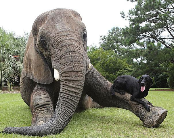unusual-animal-friendship-3-3