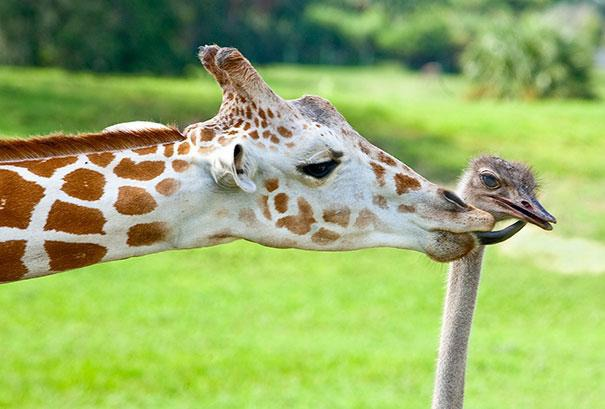 unusual-animal-friendship-10-3