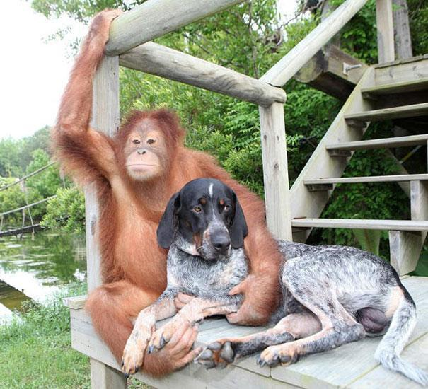 unusual-animal-friendship-13-1